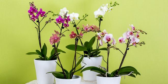 Yni İş Tebriği Çiçekleri
